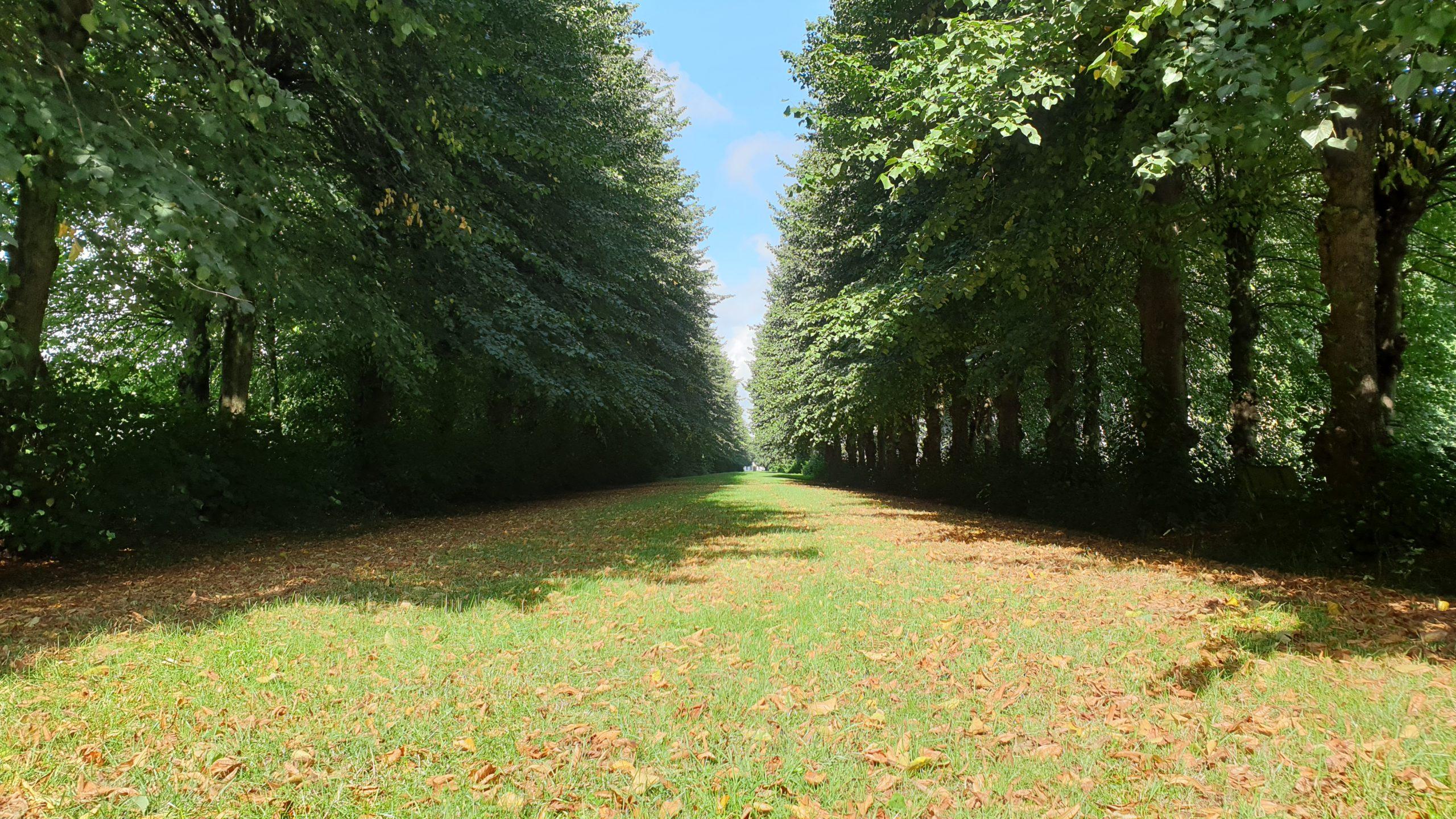 Lime tree avenue in Seestermühe