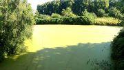 Haseldorf Castle Park
