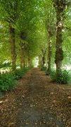 trees avenue in Seestermühe